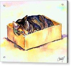 Sassy Sleeping Acrylic Print by Christy  Freeman
