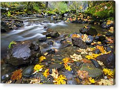 Scattered About Acrylic Print by Mike  Dawson