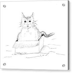 Schrodinger Cat Acrylic Print by Regina Valluzzi
