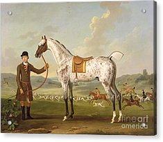 Scipio - Colonel Roche's Spotted Hunter Acrylic Print by Thomas Spencer