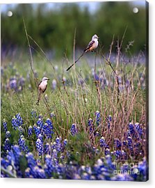Scissor-tailed Flycatchers Acrylic Print by Cathy Alba