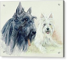 Scottie And Westie Acrylic Print by Morgan Fitzsimons