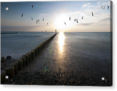 Sea Birds Sunset. Acrylic Print by Nathan Wright