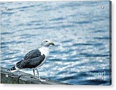 Sea Gull II Acrylic Print by Tamyra Ayles