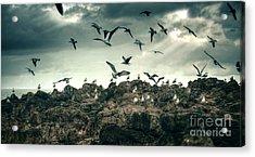 Sea Gulls Acrylic Print by Carlos Caetano