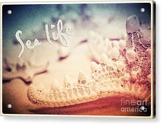 Sea Life Acrylic Print by Angela Doelling AD DESIGN Photo and PhotoArt