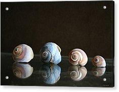 Sea Snails Acrylic Print by Linda Sannuti
