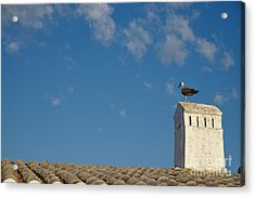 Seagull On A Chimney In Lagoa Acrylic Print by Angelo DeVal