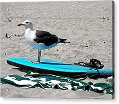 Seagull On A Surfboard Acrylic Print by Christine Till
