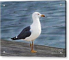 Seagull Portrait Acrylic Print by Sue Melvin
