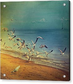 Seagulls Flying Acrylic Print by Istvan Kadar Photography