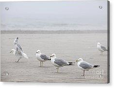 Seagulls On Foggy Beach Acrylic Print by Elena Elisseeva