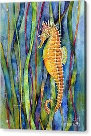 Seahorse Acrylic Print by Hailey E Herrera
