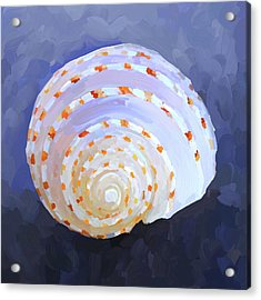 Seashell Iv Acrylic Print by Jai Johnson