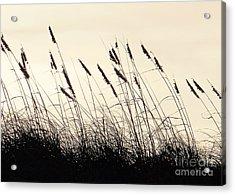 Seaside Oats Acrylic Print by Joy Hardee