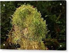 Seasons Of Magic - Hoh Rainforest Olympic National Park Wa Acrylic Print by Christine Till