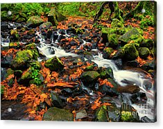 Seasons Scattered Acrylic Print by Mike Dawson