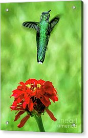 See Ya Later Acrylic Print by Sue Melvin