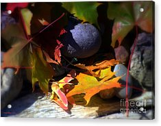 Seed Acrylic Print by Larry Keahey