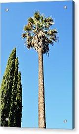 Seeking Beverly Hills Representation Acrylic Print by Todd Sherlock