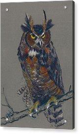 Seeking Owl  Acrylic Print by Christine Camp