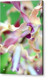 Sensual Touch Of Exotic II. Orchid II Acrylic Print by Jenny Rainbow