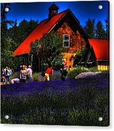 Sequim Lavender Acrylic Print by David Patterson