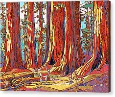 Sequoia Deer Acrylic Print by Nadi Spencer