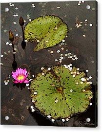 Serenity Acrylic Print by Joe Bonita