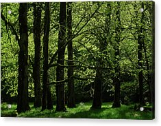 Shades Of Green Acrylic Print by Diana Shay Diehl