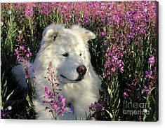 Shadows Acrylic Print by Fiona Kennard