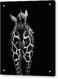 Shame On Me Acrylic Print by Paul Neville
