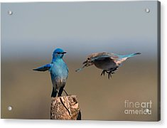 Share My Post Acrylic Print by Mike Dawson