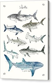 Sharks Acrylic Print by Amy Hamilton