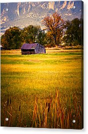 Shed In Sunlight Acrylic Print by Marilyn Hunt