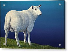 Sheep At The Edge Acrylic Print by James W Johnson