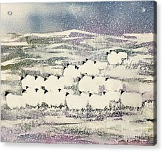 Sheep In Winter Acrylic Print by Suzi Kennett