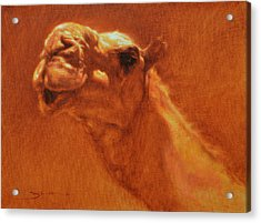 Sheikh Jamel Acrylic Print by Ben Hubbard