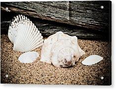 Shells On The Beach Acrylic Print by David Hahn