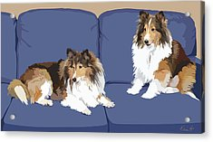 Sheltie Chic Acrylic Print by Kris Hackleman