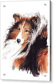 Sheltie Acrylic Print by Debra Jones
