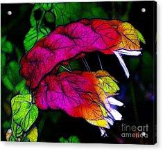 Shrimp Plant Acrylic Print by Judi Bagwell