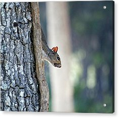 Shy Squirrel Acrylic Print by Kenneth Albin