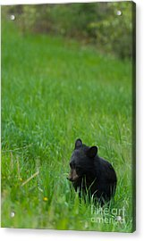 Shyness Acrylic Print by Birches Photography