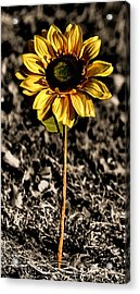 Simplicity Acrylic Print by Karen M Scovill