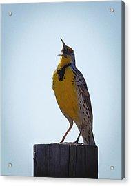 Sing Me A Song Acrylic Print by Ernie Echols