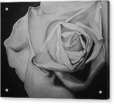 Single Rose Acrylic Print by Jason Dunning