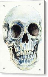 Skull Acrylic Print by Morgan Fitzsimons