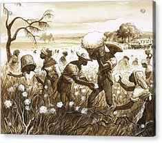 Slaves Picking Cotton Acrylic Print by English School