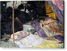Sleepin Child Acrylic Print by Tim Gainey